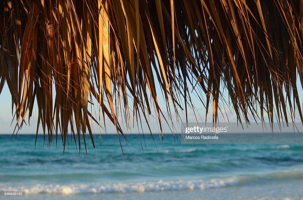 Cayo Coco, Cuba. : Stock Photo