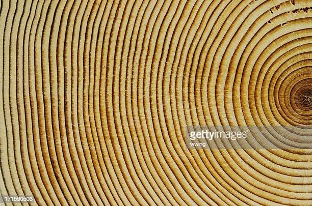 Cedar Wood Growth Rings