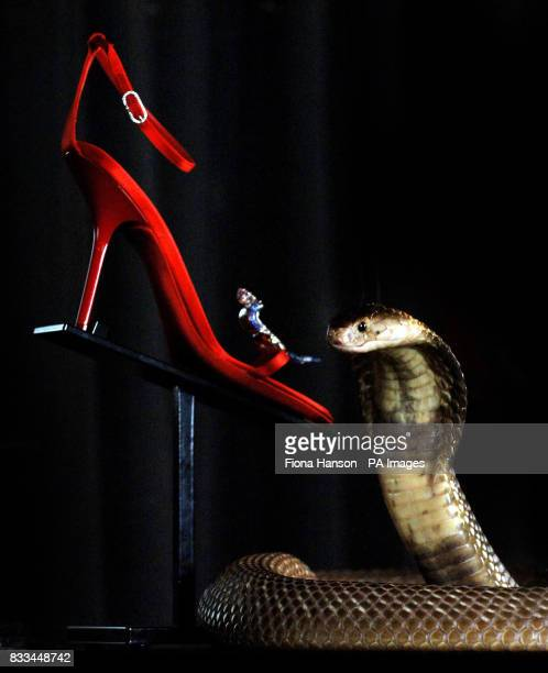 Cedric a highly aggressive and deadly Egyptian Cobra protects one of a pair of Rene Caovilla jewel encrusted sandals on sale for 62000 at Harrods...