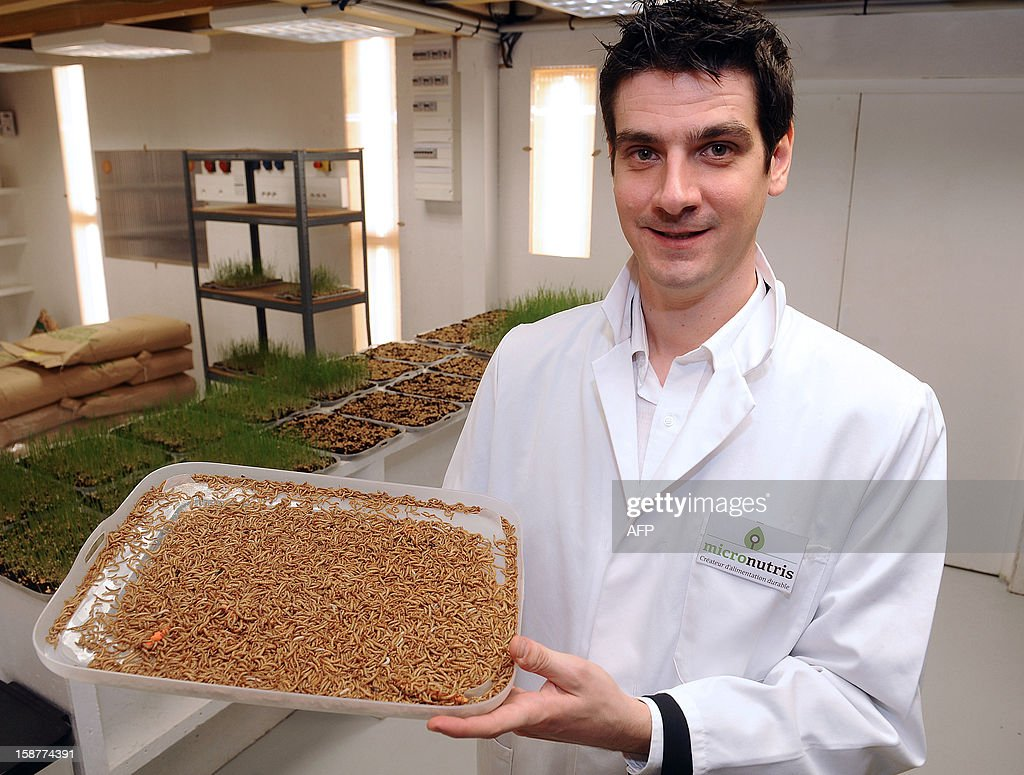 Cedric Auriol, one of the founders of Micronutris, a company producing and selling high quality food insects born and raised in France, holds a plate with worms in Saint-Orens-de-Gameville on December 27, 2012. The company also develops innovative food products based on insects which are fed from foods derived from organic farming.