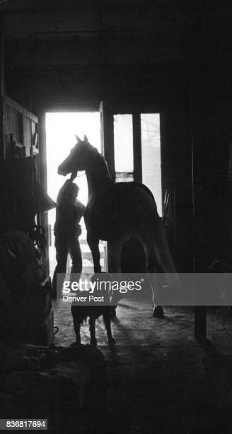 Cee Wolf and two of fourlegged friends from silhouette in the barn at Willowcroft the Wolf farm near Littleton Credit Denver Post