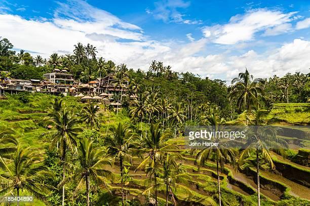 Ceking Ricefields, Ubud, Bali