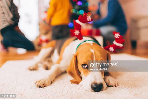 Feiern Sie Weihnachten mit der Familie
