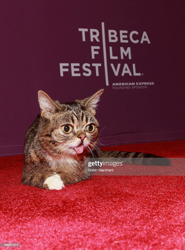Celebrity internet cat Lil Bub attends the 'Lil Bub & Friendz' world premiere during the 2013 Tribeca Film Festival on April 18, 2013 in New York City.