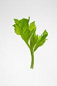 Celery leaf against white background, close-up