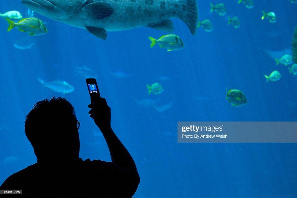 cell phone in the aquarium : Stock Photo