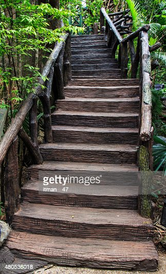 Cement stair in garden. : Stock Photo