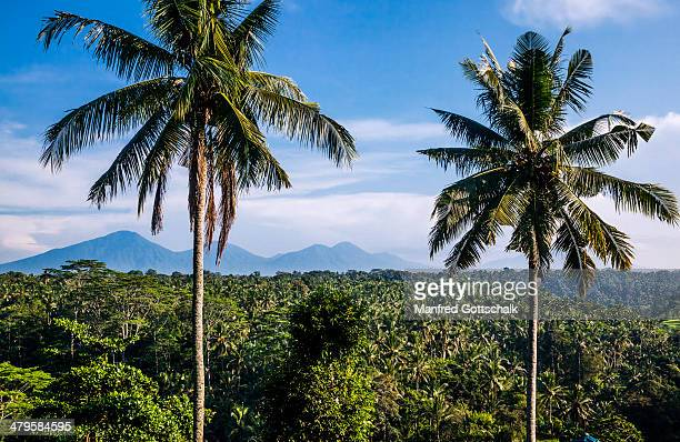Central Balinese mountains