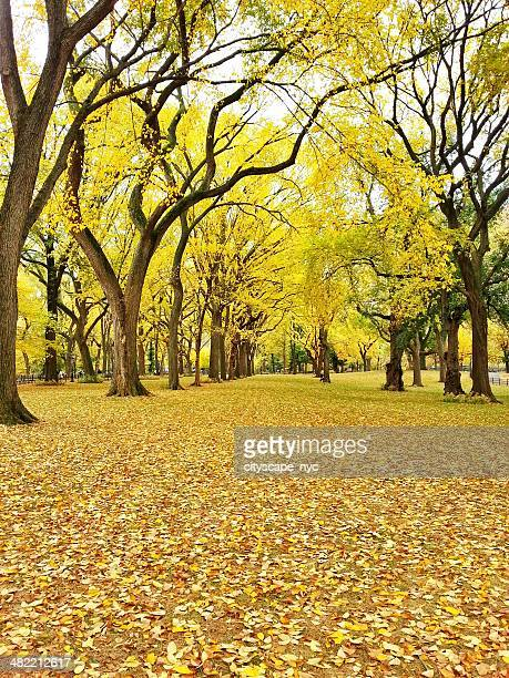 USA, New York State, New York City, Autumn scene in Central Park