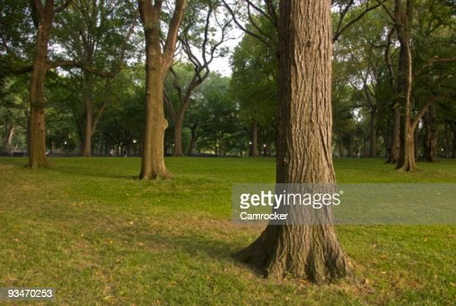 Central Park Tree Background