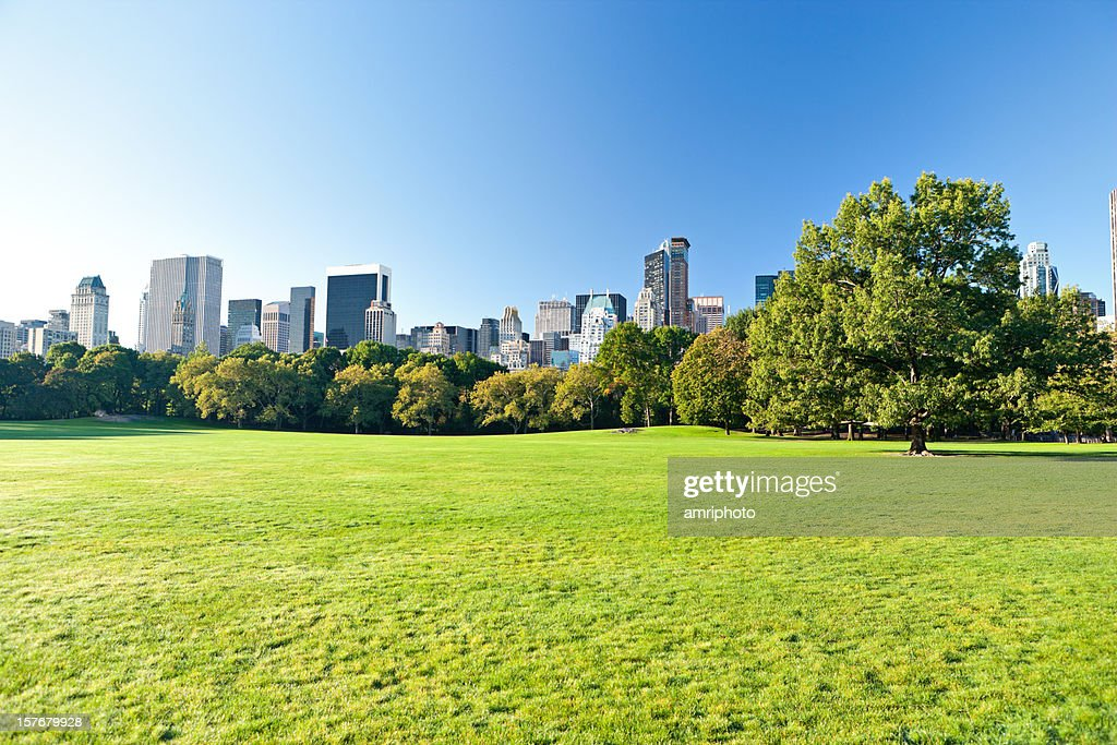 green meadow in central park new york