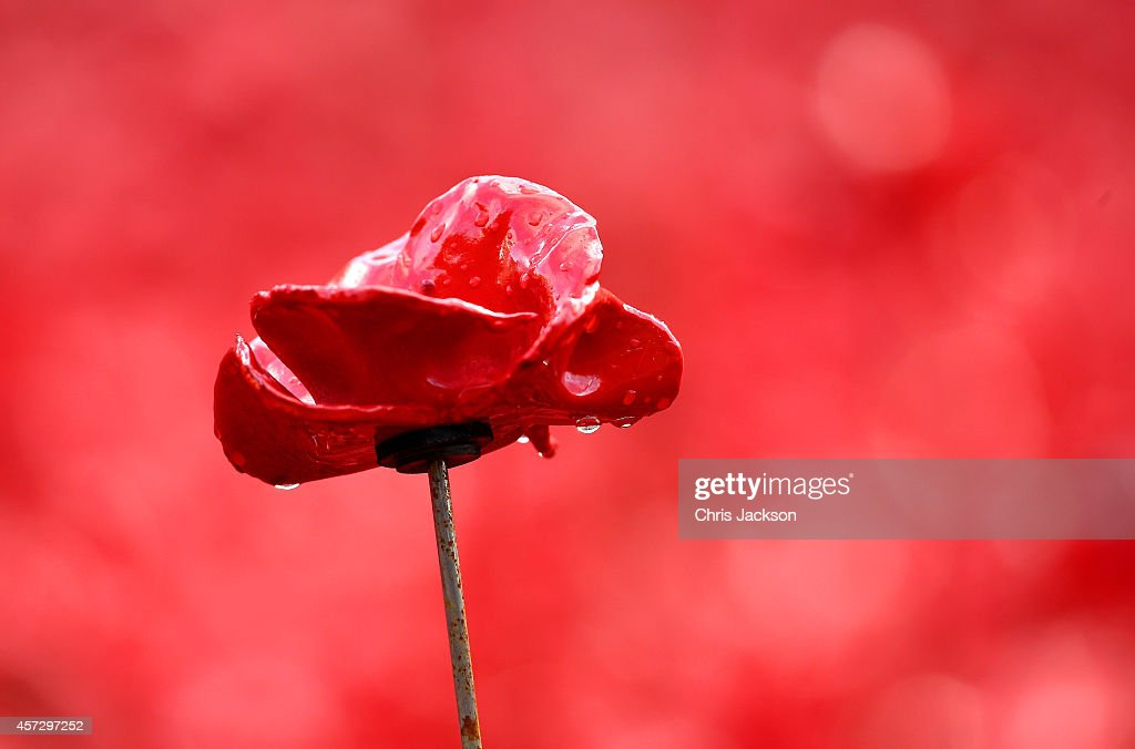 A ceramic poppie covered in rainwater is seen ahead of a visit by Queen Elizabeth II and Prince Philip Duke of Edinburgh to the Blood Swept Lands and...