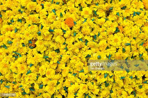 Ceremonial marigolds for garlands and religious ceremonies at Mehrauli Flower Market New Delhi