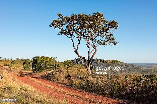 Cerrado landscape, Midwest, Brazil