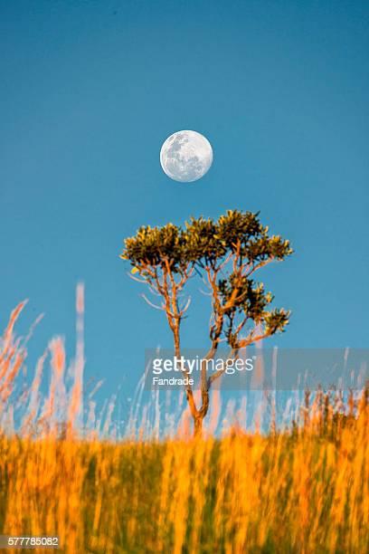 cerrado landscape view with full moon