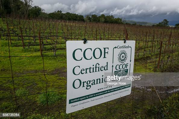 Certified Organic sign is displayed at Laurel Glen Vineyard on January 11 in Glen Ellen California Following a series of heavy January rainstorms and...