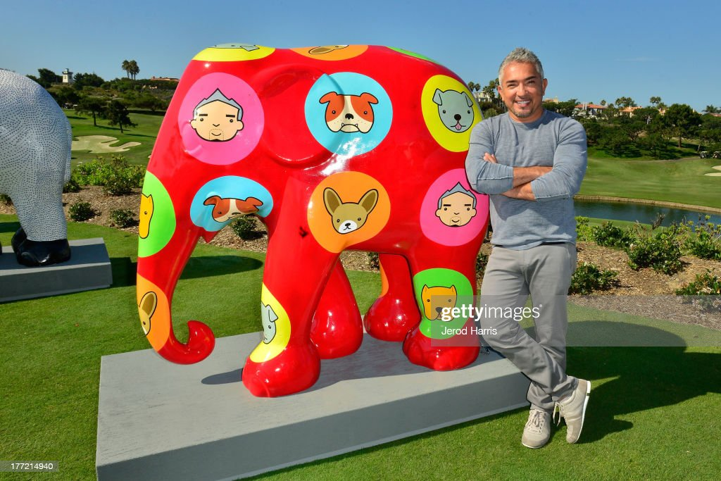 Cesar Milan attends the Elephant Parade welcome to America unveils herd of 30 lifesize elephants at St Regis Monarch Beach Resort on August 22 2013...