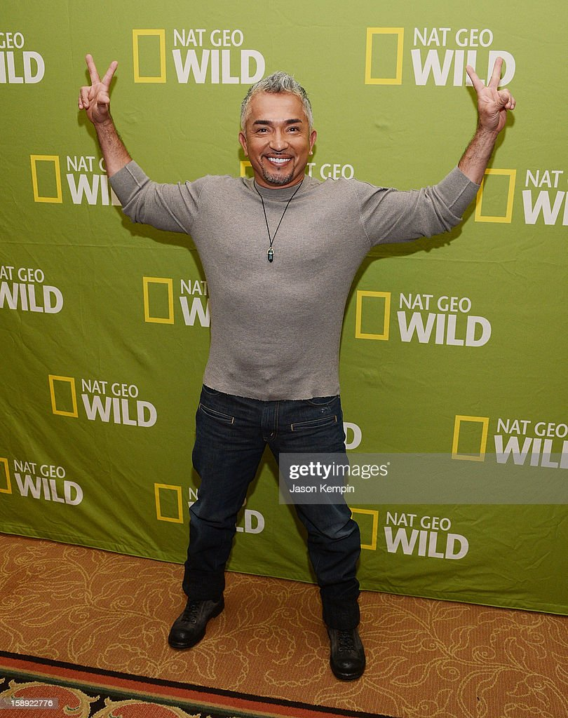 <a gi-track='captionPersonalityLinkClicked' href=/galleries/search?phrase=Cesar+Millan&family=editorial&specificpeople=780594 ng-click='$event.stopPropagation()'>Cesar Millan</a> attends the National Geographic Channels' '2013 Winter TCA' Cocktail Party at the Langham Huntington Hotel on January 3, 2013 in Pasadena, California.