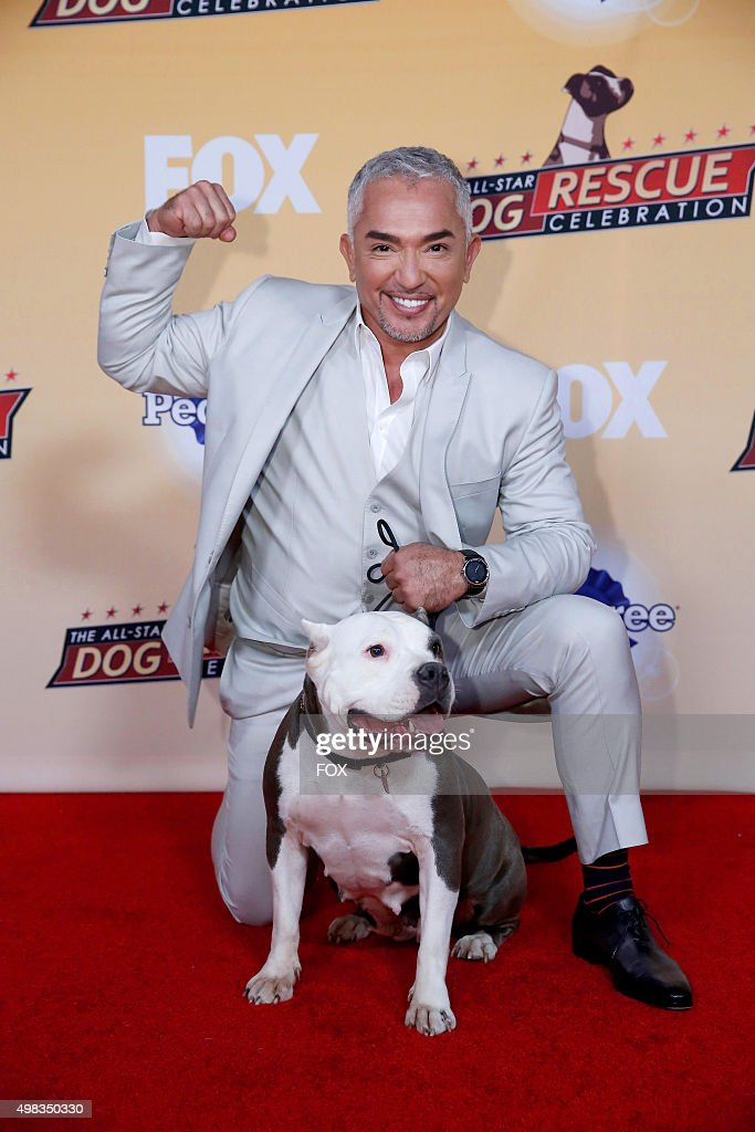 Cesar Millan attends the second annual THE ALLSTAR DOG RESCUE CELEBRATION a oneofakind event celebrating Americas rescue dogs airing Thursday Nov 26...