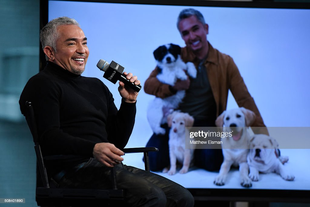 Cesar Millan discusses season 3 of his show 'Cesar 911' at AOL Studios In New York on February 4 2016 in New York City