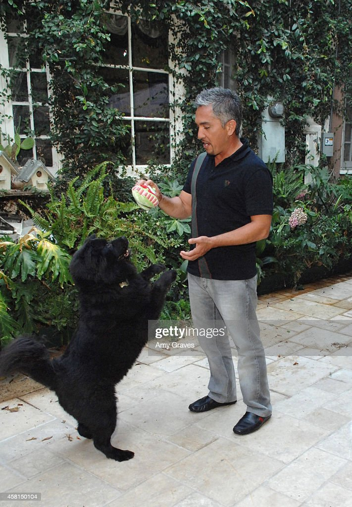 Cesar Millan is on the set of 'The Dog Whisperer' on July 25 2008 in Los Angeles California