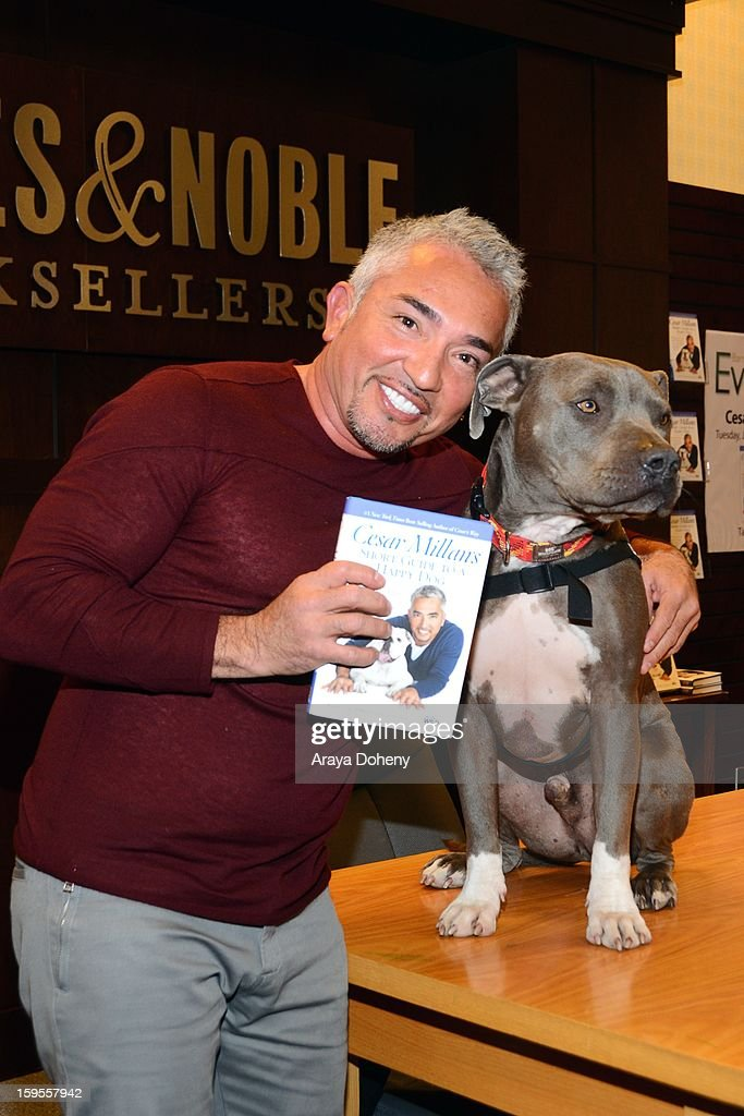 Cesar Millan signs copies of his new book 'Short Guide To A Happy Dog' at Barnes Noble bookstore at The Grove on January 15 2013 in Los Angeles...