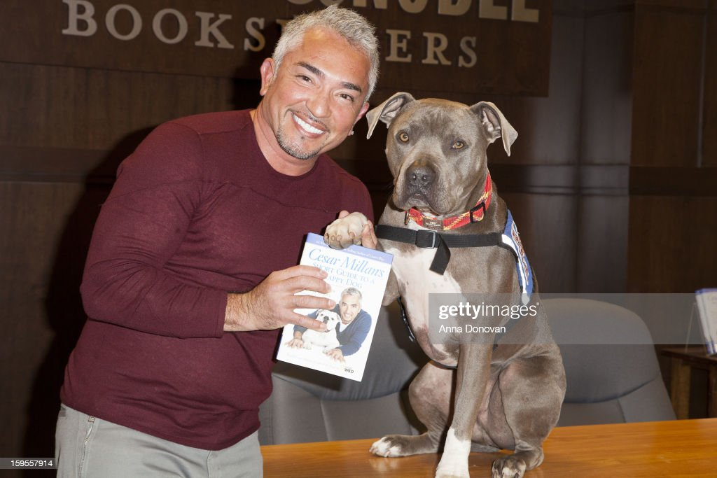 Cesar Millan TV personality from 'Dog Whisperer' promotes his new book 'Short Guide To A Happy Dog' at Barnes Noble bookstore at The Grove on January...