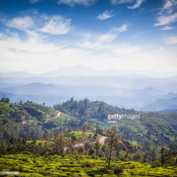 nuwara eliya cougar women Discover kerala and sri lanka 18 days, kochi to  handcrafts delicate kandyan jewellery and the cottage of a local woman making  stunning nuwara eliya.