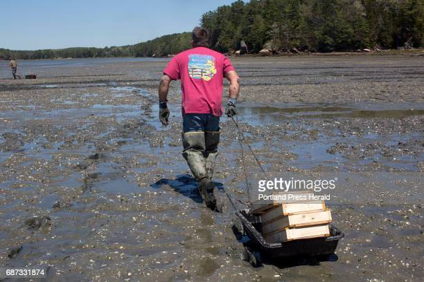 Chad Coffin a local clammer carries recruitment boxes which are experiment boxes invented by Dr Brian Beal to their next experiment location on the...
