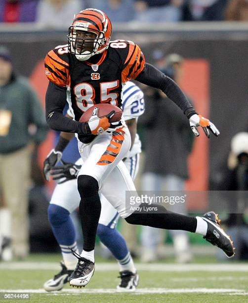 Chad Johnson of the Cincinnati Bengals catches a pass during the NFL game against the Indianapolis Colts at Paul Brown Stadium on November 20 2005 in...