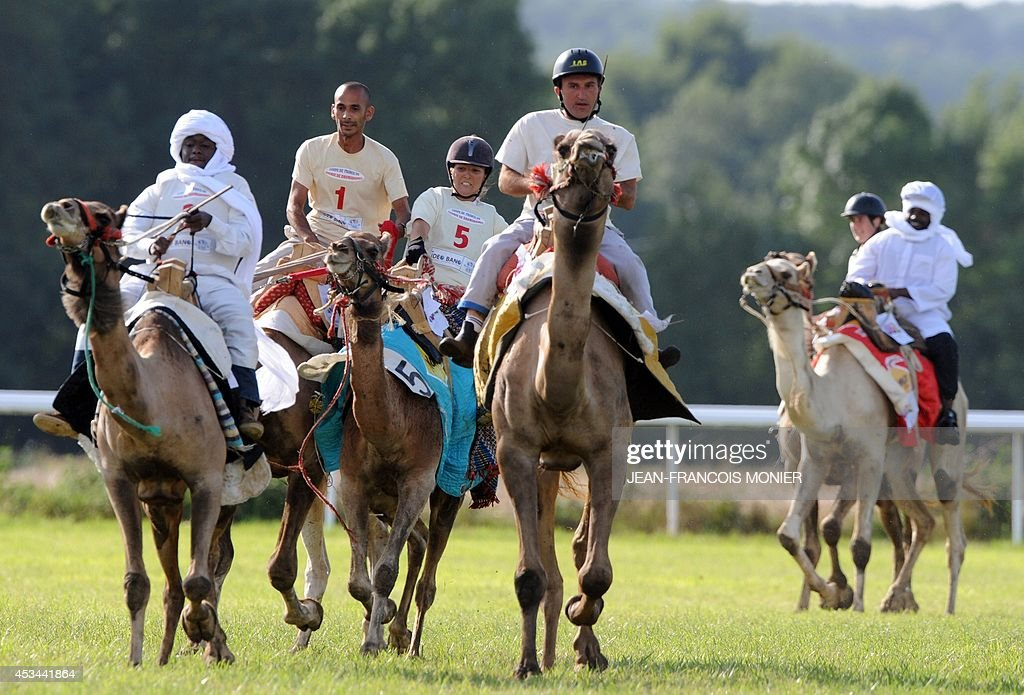 Chadian Hissein Wiledah, Franco-Moroccan Glif Nanir, French Clotilde Wibaux and French Olivier Philipponneauride camels during a French Cup of camel races on August 10, 2014 on the horserace track of La Chartre-sur-le-Loir, western France. Unusual in these latitudes, eight dromaderies that have never seen the desert, took part in two races of 1000 meters.
