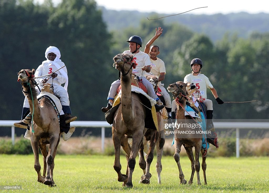 Chadian Hissein Wiledah, French Olivier Philipponneau, Franco-Moroccan Glif Nanir and French Clotilde Wibaux ride camels during a French Cup of camel races on August 10, 2014 on the horserace track of La Chartre-sur-le-Loir, western France. Unusual in these latitudes, eight dromaderies that have never seen the desert, took part in two races of 1000 meters.