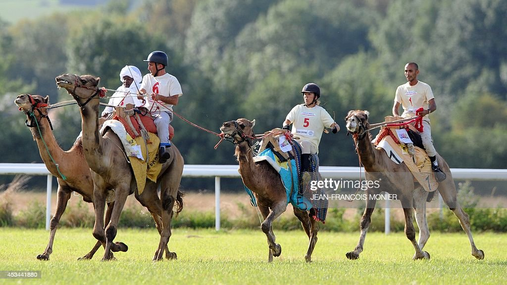 Chadian Hissein Wiledah, French Olivier Philipponneau, French Clotilde Wibaux and Franco-Moroccan Glif Nanir ride camels during a French Cup of camel races on August 10, 2014 on the horserace track of La Chartre-sur-le-Loir, western France. Unusual in these latitudes, eight dromaderies that have never seen the desert, took part in two races of 1000 meters.