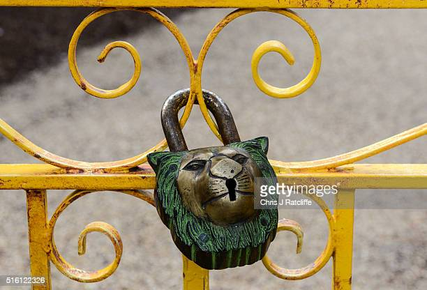 A chain is unlocked from a lion shaped padlock on the entrance gate to the new lion enclosure 'Land Of The Lions' at London Zoo on March 16 2016 in...