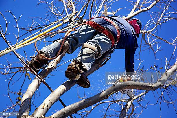 Chainsaw Arborist Tree Surgeon High Cutting