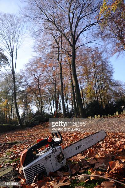 A chainsaw is pictured on the ground on November 8 2011 in a forest near Essen western Germany A study for the climate change shows that the forest...