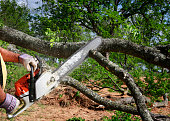 Professional is cutting trees using an electrical chainsaw