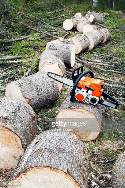 Chainsaw with cut log