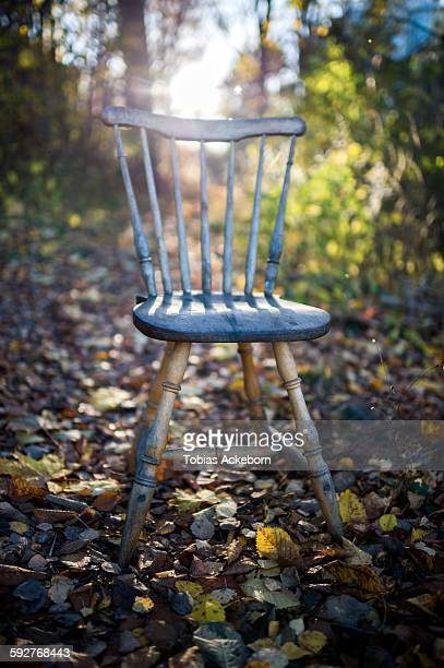 Chair in the forest.
