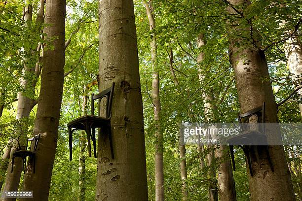 Chairs attached to tree trunks high up in forest