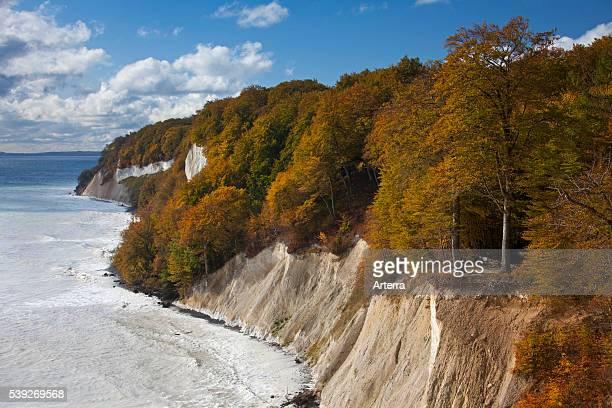 Chalk cliffs at the coast of Jasmund National Park island of Ruegen MecklenburgWestern Pomerania Germany