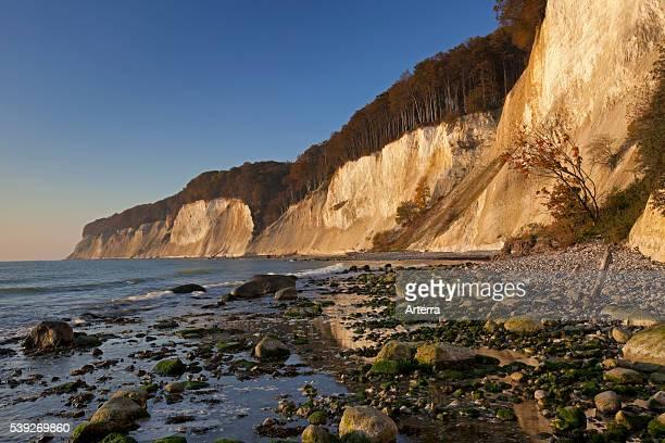 Chalk cliffs in Jasmund National Park on Rugen Island on the Baltic Sea Germany