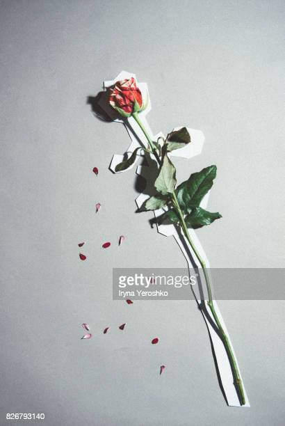 Chalk outline of a rose