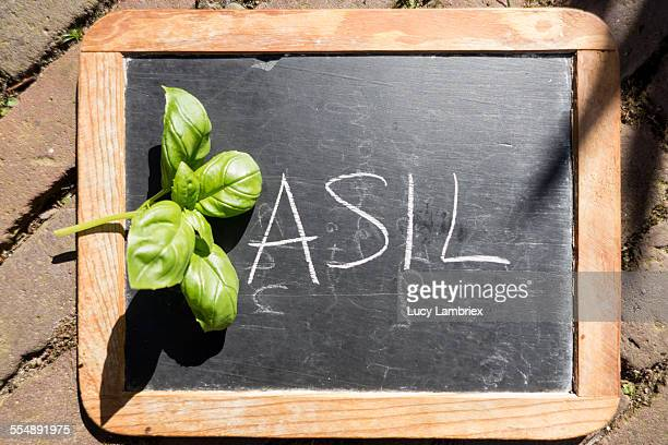 Chalkboard with written word basil