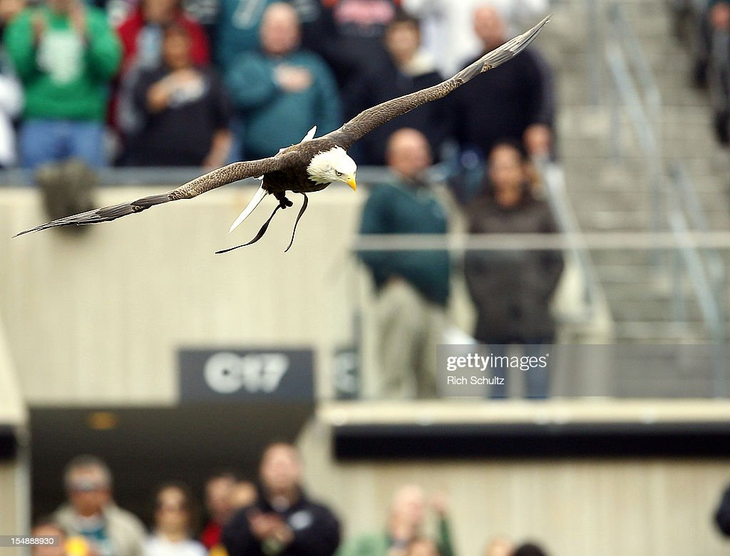 Challenger, a Bald Eagle, flys into the stadium before the Philadelphia Eagles game against the Atlanta Falcons at Lincoln Financial Field on October 28, 2012 in Philadelphia, Pennsylvania. The Falcons defeated the Eagles 30-17.