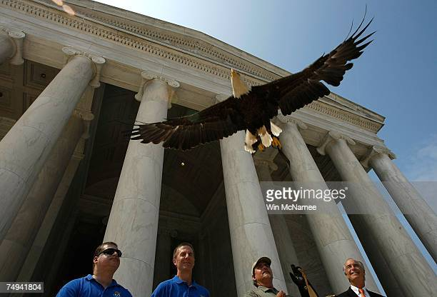 Challenger a bald eagle is released during an event with Secretary of the Interior Dirk Kempthorne marking the removal of the bald eagle from the...