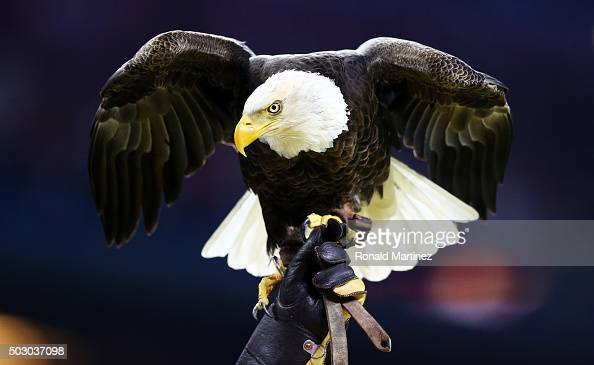 Challenger a Bald Eagle lands with its handler after flying through the stadium prior to the Goodyear Cotton Bowl between the Alabama Crimson Tide...