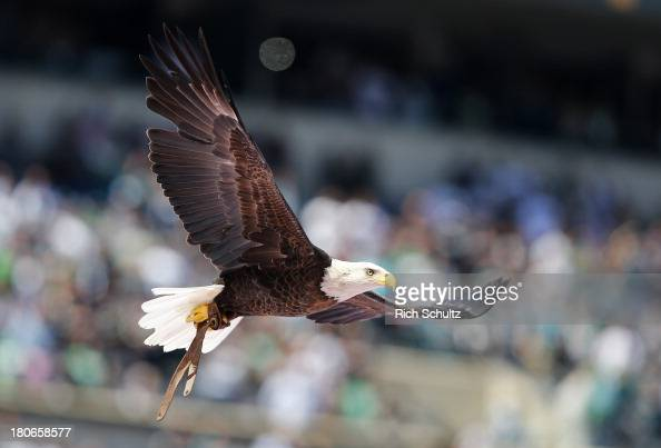 Challenger a Bald eagles soars over the stadium before the start of a game between the San Diego Chargers and the Philadelphia Eagles at Lincoln...