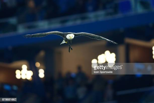 Challenger the bald eagle flies around the stadium during the playing of the national anthem prior to the start of the game between the Minnesota...