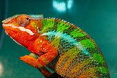 chameleon/file_thumbview/54719822/1